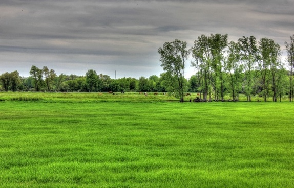 landscape and livestock in the distance in southern wisconsin