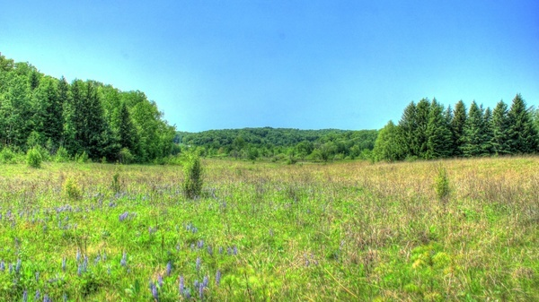 landscape beneath blue skies at hoffman hills state recreation area wisconsin