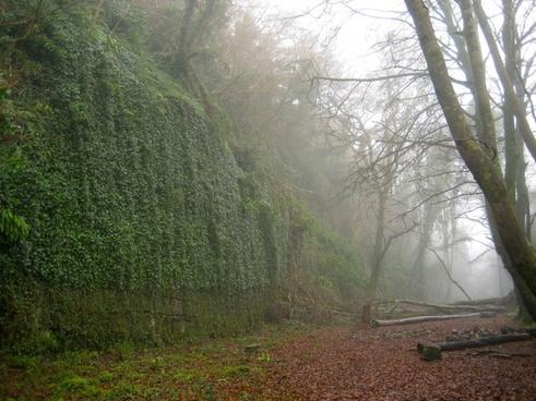 landscape fog foggy