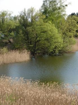 landscape green nature