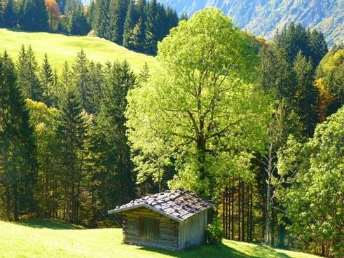 landscape hut trees