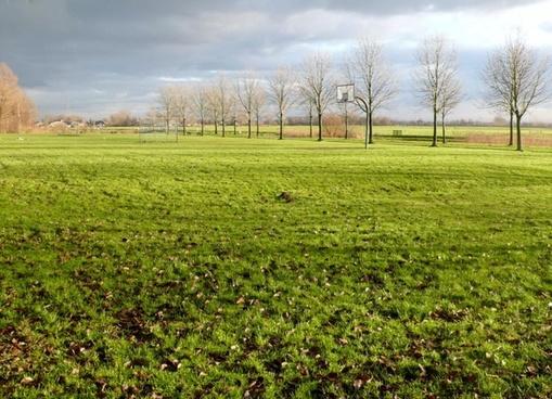 landscape meadow tree