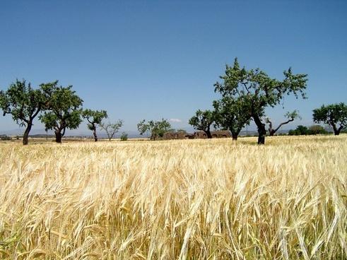 landscape nature field