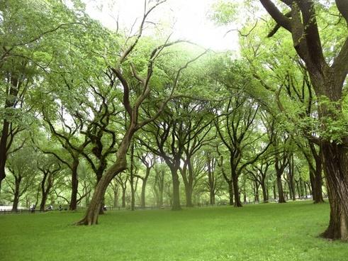 landscape park trees