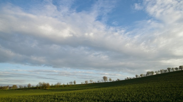 landscape trees landscape nature