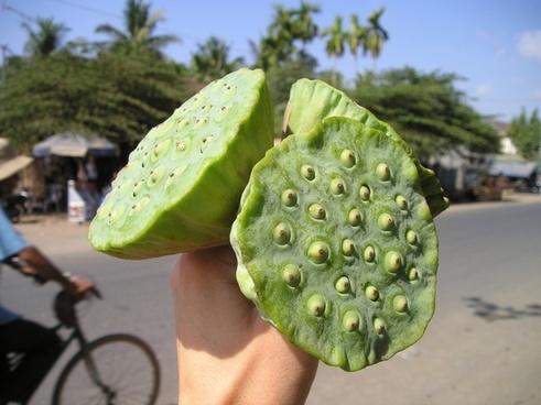laos lotus bud bud