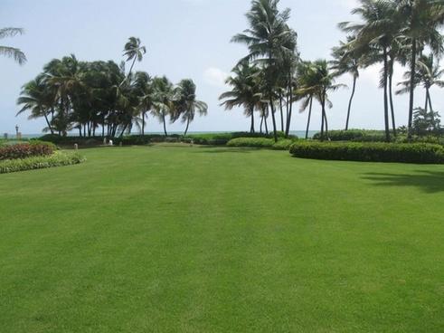 lawn of puerto rico