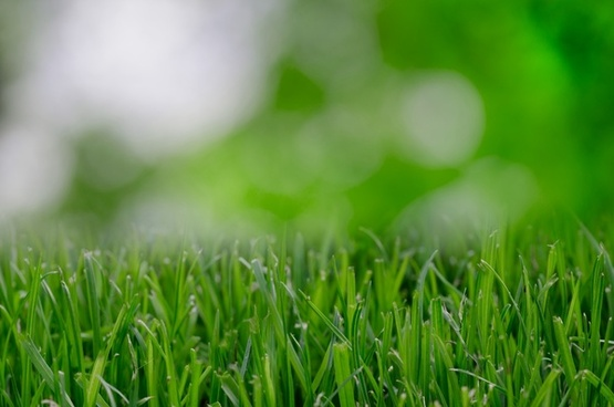 lawn up close