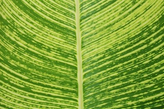 leaf detail background