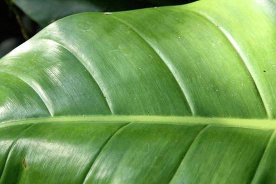 leaf detail background 2
