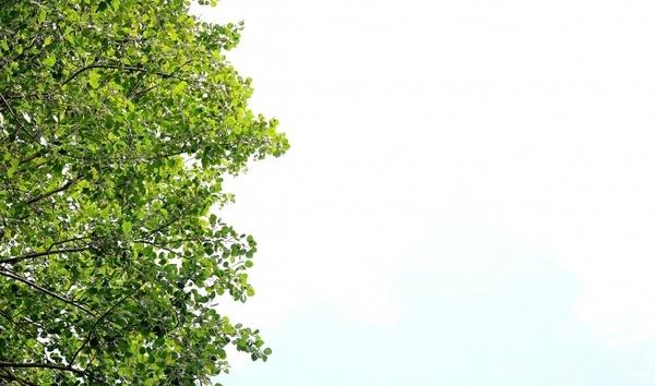 leaf green leaf green