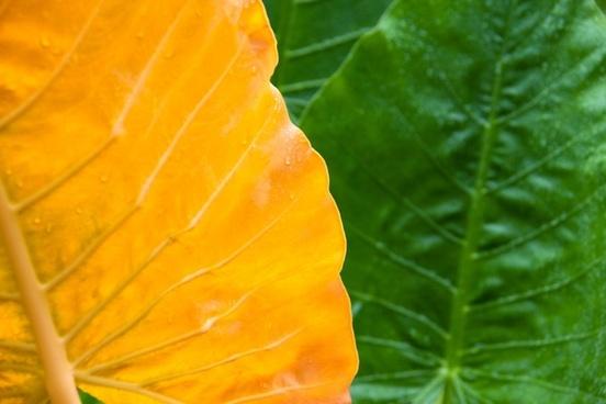 leaf green wet