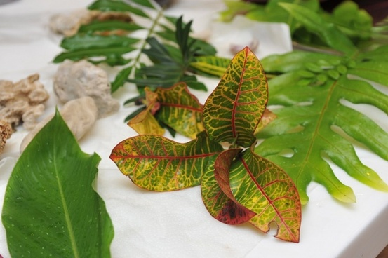 leafs 1