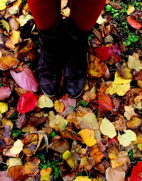 leaves autumn legs