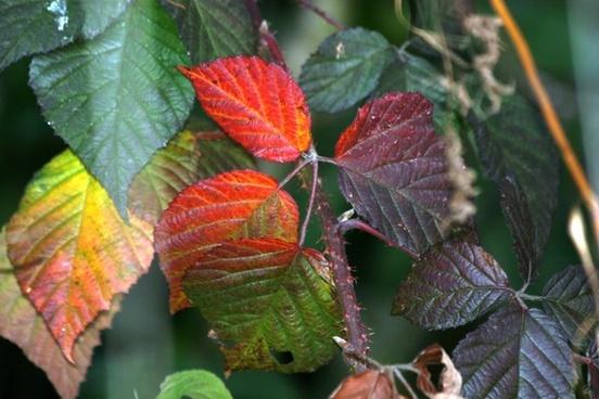 leaves autumn nature