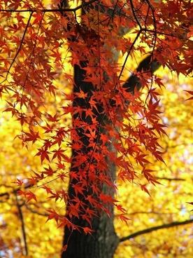 leaves colorful autumn
