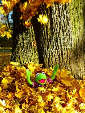 leaves colorful sheet rain