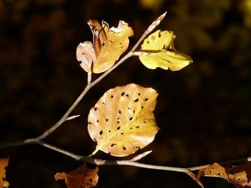 leaves fall foliage disease