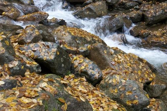 leaves foliage fall water stream rocks