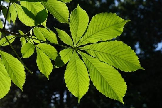 leaves green back light