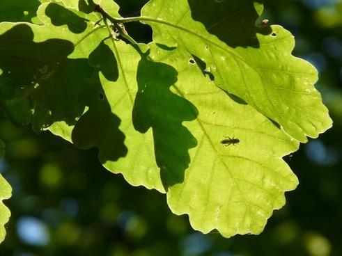 leaves green shadow play
