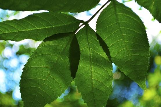 leaves green summer