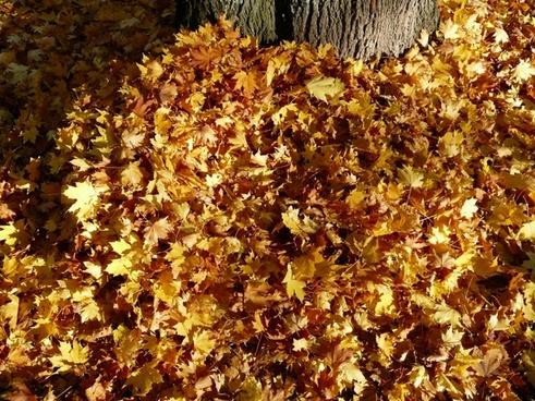leaves leaf piles autumn