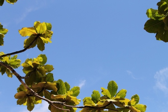 leaves on branch in clear blue sky