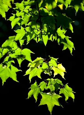 leaves on dark background