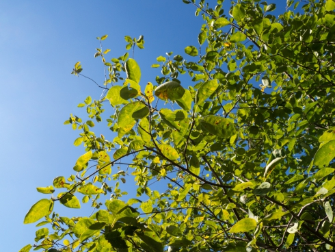 leaves on tree over blue sky 2