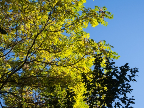 leaves on tree with silhouette