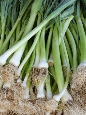 leek spring onion food