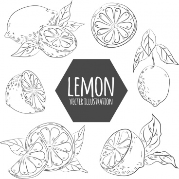 lemon design elements handdrawn sketch