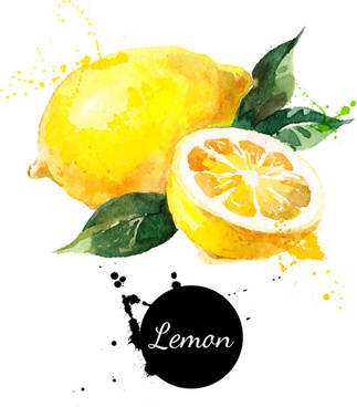 lemon watercolor vector