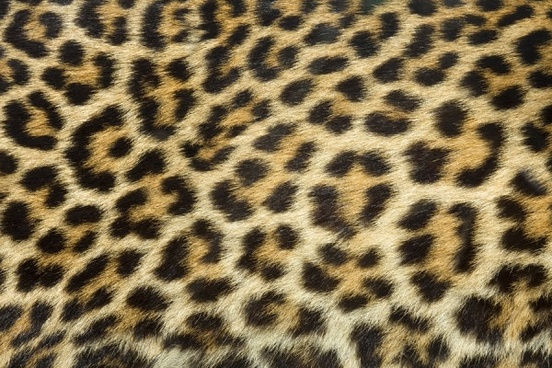 leopard flannel highdefinition picture 3