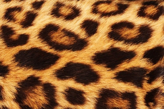 leopard flannel highdefinition picture 4