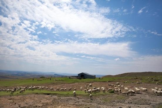 lesotho africa landscape