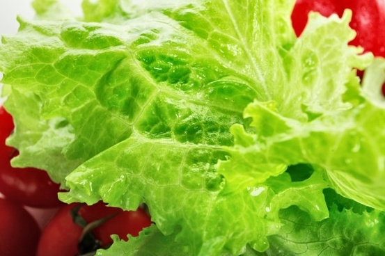 lettuce closeup highdefinition picture