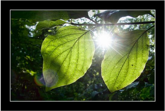 life giving light