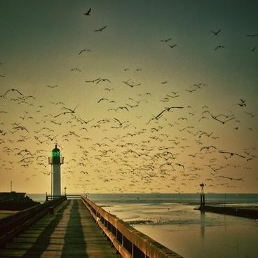 lighthouse gulls sky