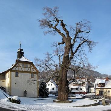 linde tree enge