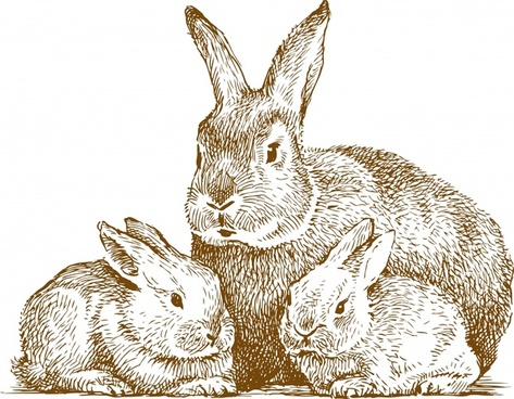 line art animal rabbit vector