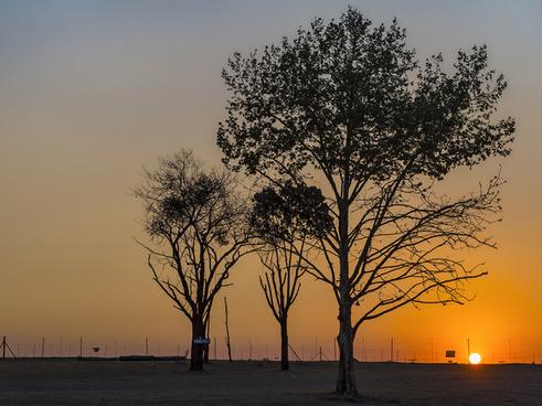 lion park sunset