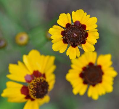 little wildflowers