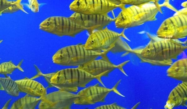 live fish aquarium