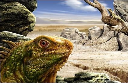 lizard closeup psd layered