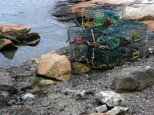 lobster cages fishery