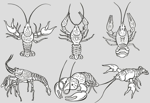 lobster icons black white handdrawn sketch