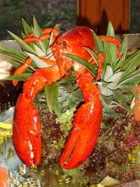lobster zehnfu�krebs