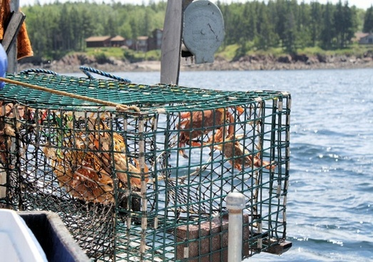 lobstering cage